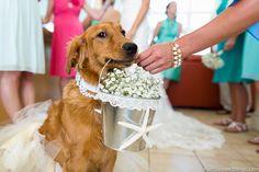 50 Adorable Ways to Include Your Pet in Your Wedding Day Dog Wedding, Rustic Wedding, Dream Wedding, Wedding Day, Wedding Dreams, Wedding Bells, Wedding Stuff, Island Weddings, Marry Me