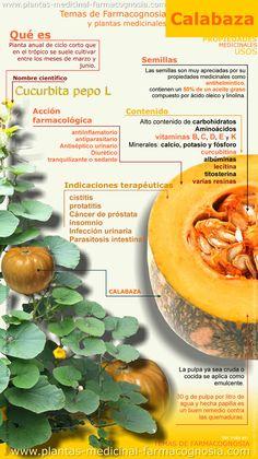 Infografía. Resumen de las características generales de la planta de la Calabaza. Propiedades, beneficios y usos medicinales más comunes de la calabaza. Pulpa y semillas.