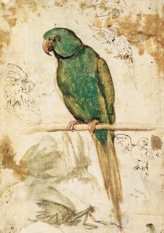 dendroica:  foreverinbloom:  nihtegale:  Study of a Parrot, 1515-1520  sup polly  Giovanni da Udine (1487–1564)