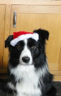 Happy #Collie #Christmas!