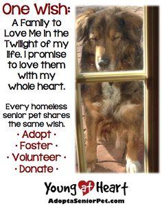 Consider adopting a senior pet.