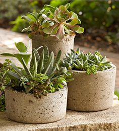 Create rustic, textured containers from a mixture of Portland cement, perlite (or vermiculite), and water. Once you master this technique, you can make containers in any size. Description: Check out Lowe's Idea Exchange today to see more inspiring projects.