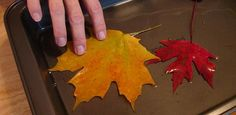 Preserving Fall Leaves in glycerin/water solution--this would be cool for all the beautiful leaves I see.