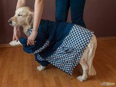 Aprende a usar aceite de coco para tratar las pulgas y la piel de los perros vía es.wikihow.com