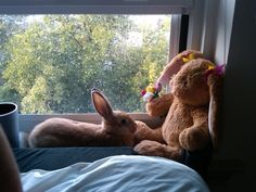 Bunny Hangs Out with His Stuffed Friend - August 20, 2011