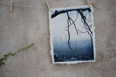 Branch Silhouette solarplate etching on handmade by 88editions, $388.00