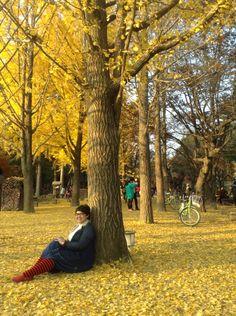 Nami Island #WinterSonata, KOREA #Autumn Korea Autumn, Nami Island, Window, Couple Photos, Fall, Holiday, Beautiful, Vacations