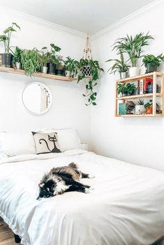 The perfect urban jungle room — bright white sheets, plant shelf, and circle mirror! bedroom minimalist white The perfect urban jungle room — bright white sheets, plant shelf, and circle mirror! Room Ideas Bedroom, Bedroom Decor, Bedroom Small, Bedroom Designs, Small Minimalist Bedroom, White Bedrooms, Bedroom Black, Bedroom Inspo, Bedroom Inspiration