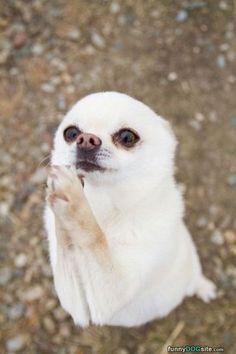 Oh+Please+Please+Please+-+funnydogsite.com