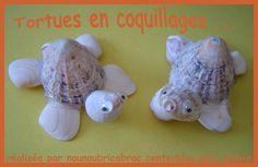 schildpad van schelpen