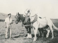 Alfred Charles Jack Whitear with plough horses