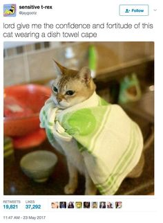 Funny Animal Pictures Of The Day - 24 Pics Super Cat will have your dishes done in seconds. Funny Animal Pictures, Funny Animals, Cute Animals, Random Pictures, Crazy Cat Lady, Crazy Cats, I Love Cats, Cute Cats, Tierischer Humor