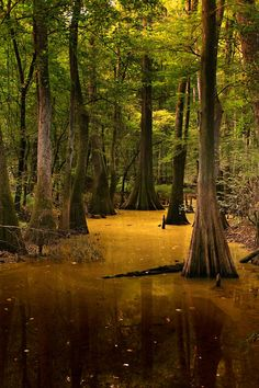 Congaree National Park, US National Parks