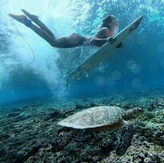 Duck Dive and Turtle
