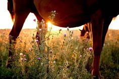 Amongst the Grass