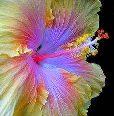 The Path Hibiscus - Favorite Photoz