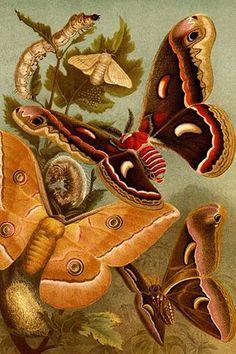 Moths, Caterpillars & Larvae