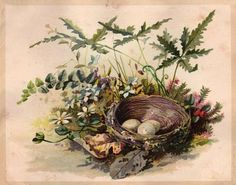Free Vintage Clip Art - Darling Nest with Eggs - The Graphics Fairy...framed for the wall would be my use!
