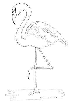 animal line drawings | Animal Drawings Coloring Pages | Flamingo ...