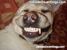 Funny dogs upside down