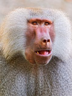 woah that is not what i was expecting baboon