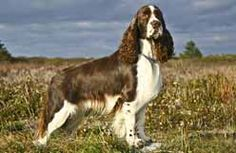 Canadian Kennel Club | Club Canin Canadien Puppy List, Choosing A Dog, Club, Puppies, Dogs, Canadian Horse, Puppys, Pet Dogs, Doggies