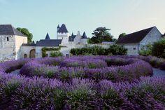 Lavendar garden at Chateau Rivau