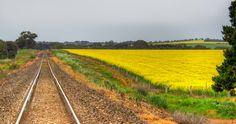 Along the rail-road track