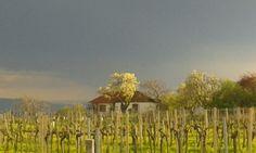 Gewitterstimmung am Nussberg in Wien! Vineyard, Hiking, Country Roads, Outdoor, Summer, Walks, Outdoors, Vine Yard, Vineyard Vines