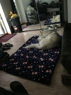 Nyt tæppe