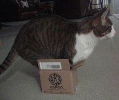 26 kuvaa kissoista, jotka ahtautuvat mitä erikoisimpiin paikkoihin   Vivas