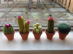 vijf cactussen op een rij