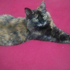 Minha Liza!!! @gato_chico_ @gatos_y_gatitos_fotos @euamogatoss