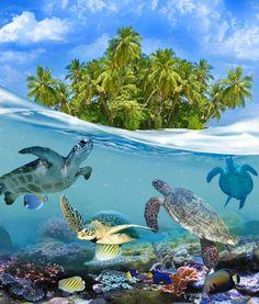 Tortugas en Maldivas.