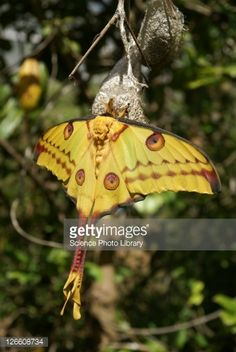 Image result for moth emerging images