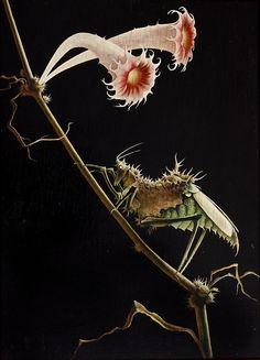 f-featherbrain:  Franz Sedlacek,Insekt mit Blüten, 1935 (via: penccil)