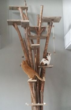 Krabpaal 4 meter hoog in vide geplaatst Cats, Gatos, Kitty, Cat, Cats And Kittens, Kittens