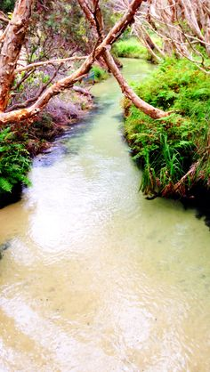 Eli Creek Fraser Island. Queensland Australia