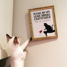 I do what I want Funny Animal – 23 Pics
