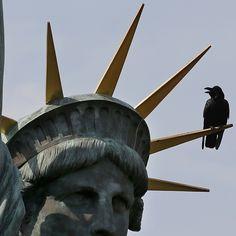 Un cuervo se posa sobre la corona de una réplica de la estatua de la libertad en Tokio.  Foto: AP