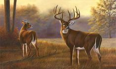 Deer Pics, Deer Pictures, Deer Paintings, Deer Drawing, White Tail, Wildlife Art, Shadows, Moose Art, Hunting