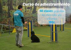 Cursos de educación y obediencia canina en Maskokotas #adiestramiento #mascotas #perros #Maskokotas