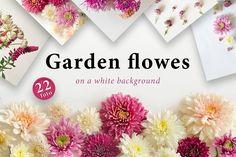 Foto set garden flowers on a white background. Typography Inspiration, Typography Design, Creative Market Free, Free Graphics, Free Design, Design Elements, Bloom, Clip Art, Graphic Design