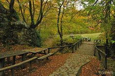 Skra - Kilkis Regional Unit - Greece Greek Flowers, Forest Mountain, Tree Forest, Flowering Trees, Macedonia, Greece Travel, Forests, Regional, We The People