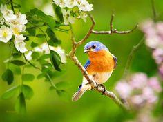 Bird Photography, Bluebird, Eastern Bluebird, Wildlife Prints, Photography Prints, Summer Decor, Wall Art, Bird Prints, Nature Photography by ChristinaRolloArt on Etsy