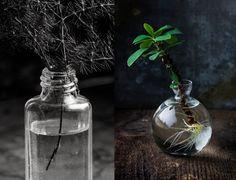 Evelinas Ekologiska: Gröna Växter & Gula Ägg http://www.evelinasekologiska.se/