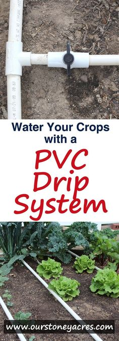 PVC Drip Irrigation is an inexpensive and easy to build method for watering your backyard garden. After adding a PVC drip irrigation system to your garden you can expect stronger vegetable plants, fewer weeds and a lower water bill! Veg Garden, Water Garden, Vegetable Gardening, Garden Edging, Garden Pond, Garden Planters, Organic Gardening, Gardening Tips, Gardening Gloves
