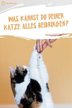 Animals And Pets, Kitten, Cats, Apollo, Cat Facts, Cat Hacks, Cat Behavior, Dog Care, Funny Cat Pics