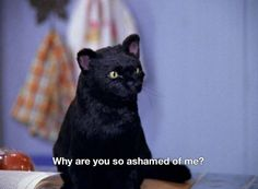All images belong to cbs, paramount and Archie comics. Tv Quotes, Movie Quotes, Cat Memes, Dankest Memes, Reaction Pictures, Funny Pictures, Salem Cat, Salem Saberhagen, Pinturas Disney