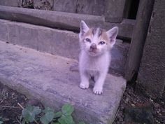 Cute kitty found in a temple